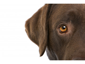 Did you know that the vision of dogs is not black and white as it is popularly believed?
