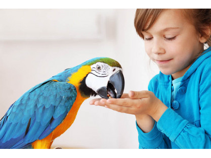 HOW WELL DO YOU KNOW THE WORLD OF PARROTS AND MACAWS?